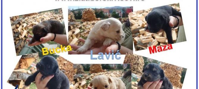 Akcija Besplatan vikend na Zlatiboru za one koji udome Lolino štene!