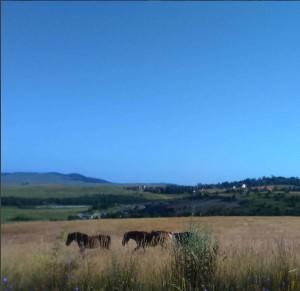 konj 3