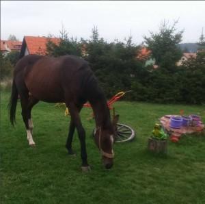 konj2